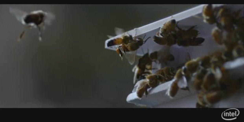 """Já imaginou abelhas com """"mochilas às costas""""?"""