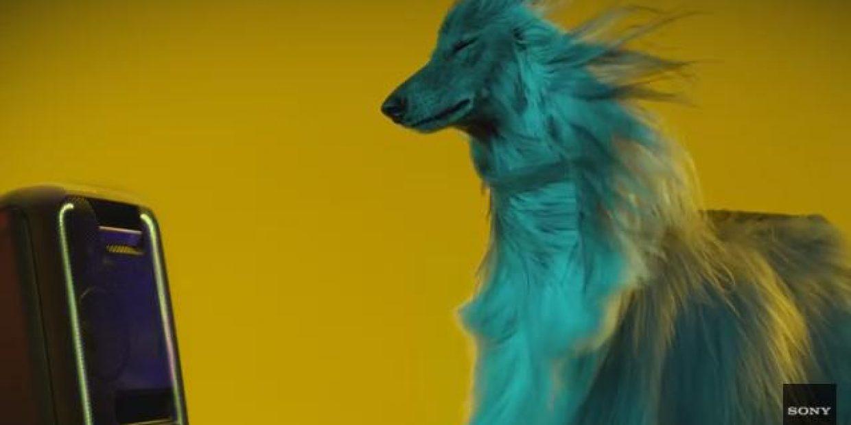 Beyoncé e Justin Bieber são os preferidos dos cães