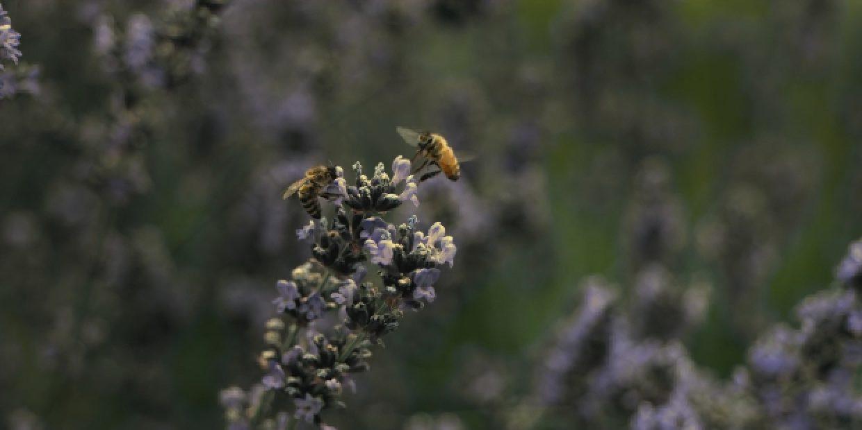 Häagen-Dazs mostra o mundo pelos olhos de uma abelha