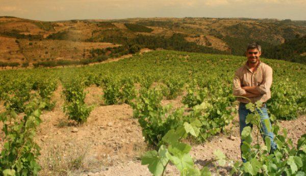Mont'alegre é um vinho com… altitude