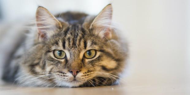 Gatos superam cães no aumento dos gastos em comida