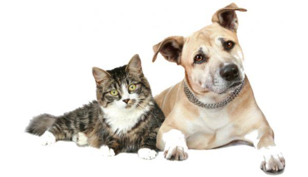 Há animais que precisam da sua ajuda