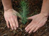 El Corte Inglés e Quercus vão plantar árvores