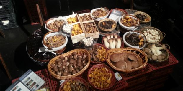 Chapitô acolhe Festa dos Cogumelos