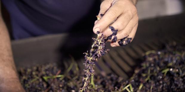 José Maria da Fonseca investe em vinho de talha