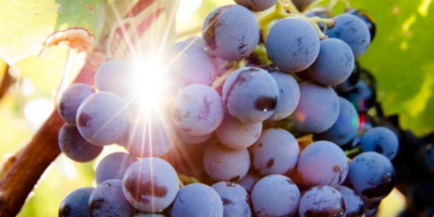 Vinhos do Alentejo crescem no digital