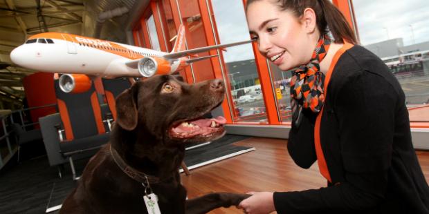 easyJet tem solução para viajantes com animais