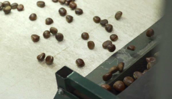 Como as castanhas fizeram crescer a AgroAguiar