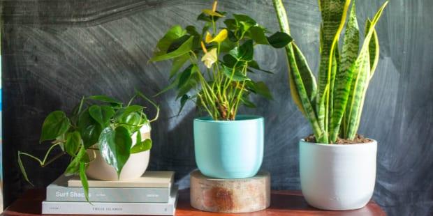 Generosa: plantas fazem falta no meio urbano