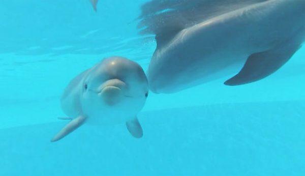 No Dia da Mãe conheça a nova cria de Golfinho-roaz do Zoo