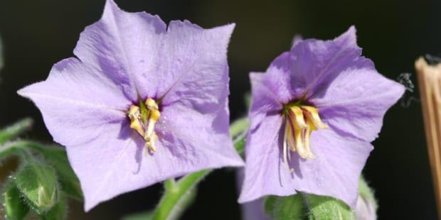 Klorane: em nome da biodiversidade
