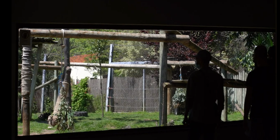Jardim Zoológico de Lisboa reabre portas a tempo de soprar as velas